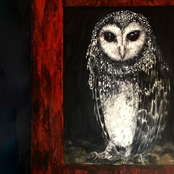Sooty-Owl-2